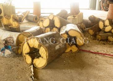 Agarwood Logs