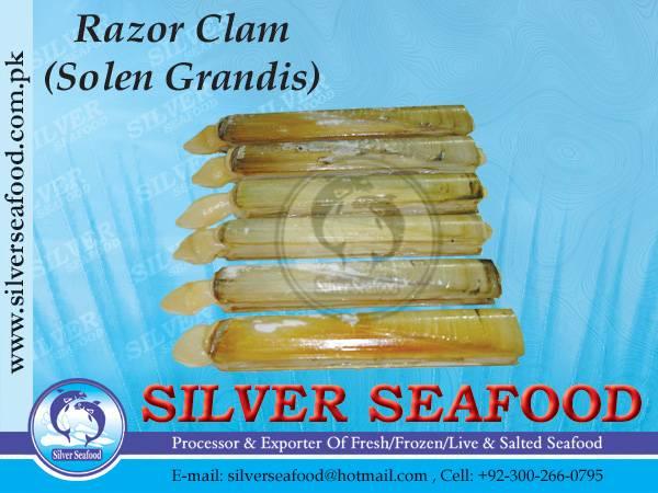 RAZOR CLAM.SOLEN GRANDIS