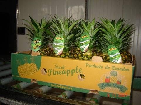 pineaple -piña