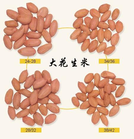 Peanuts,Peanuts kernels