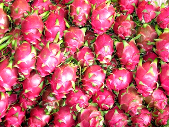 FRESH DRAGON FRUIT (+841642828779)