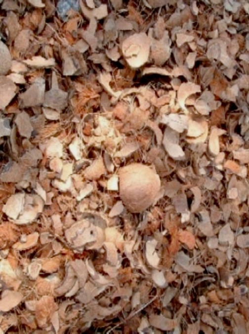 Coconut shell at competitive prices