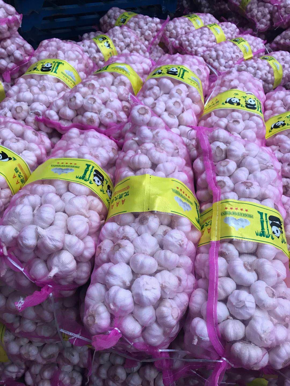 Chinese best quality fresh garlic