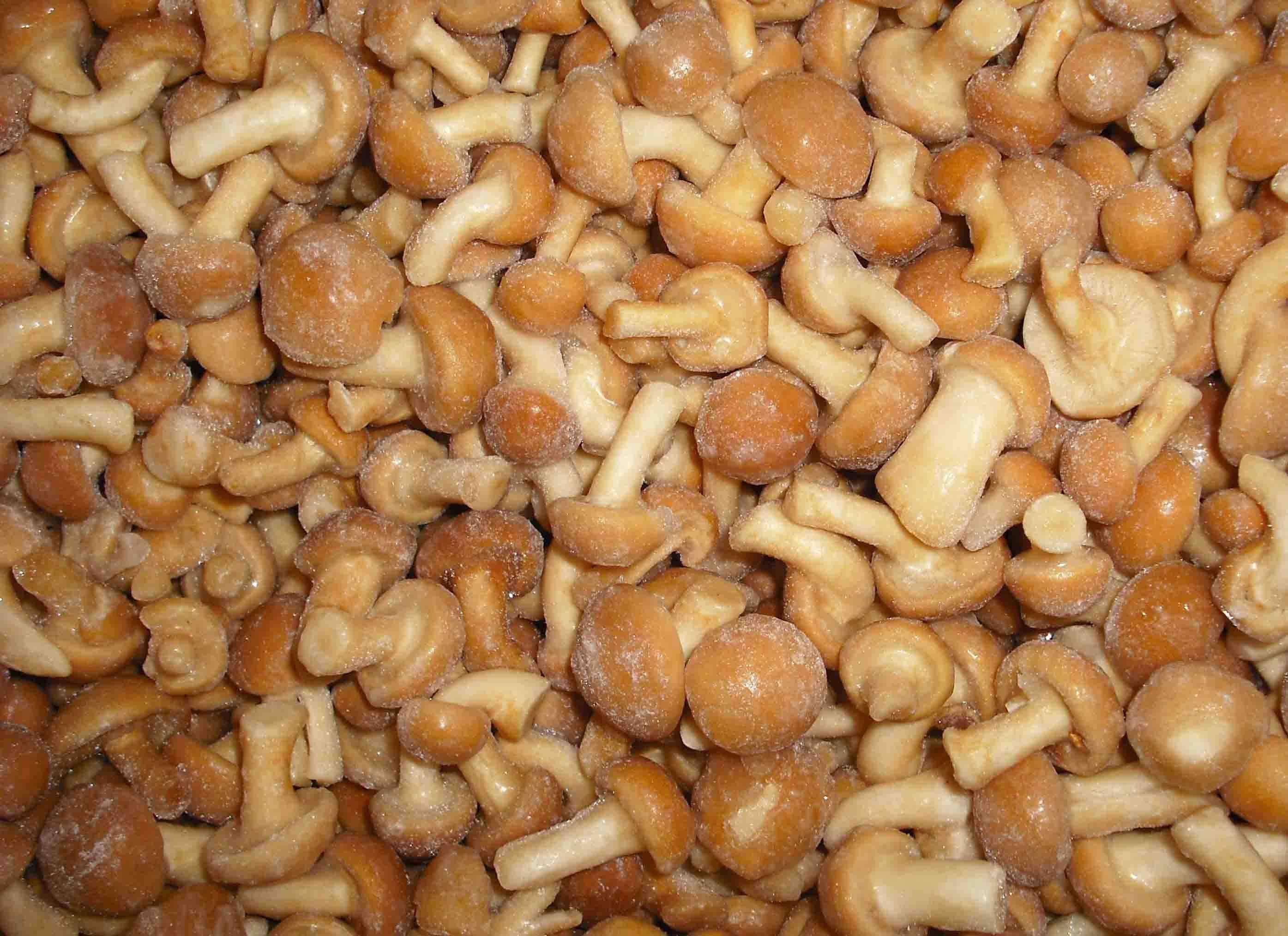 Mushroom Nameko