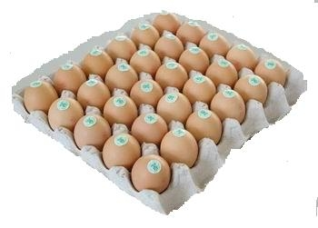 Sell All Types of Eggs and Chicks, Egypt Origin