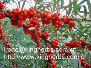 China Sea Buckthorn Seed Extract CAS:60-33-3