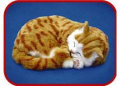 sleeping cat,breathing cat,perfectzzz