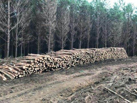 Round Pine Logs