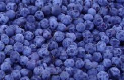 Blueberry Powder (100% natural), DaXingAnLing original GMP standard factory