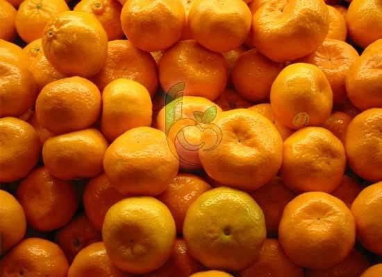 Egyptian fresh mandarins by fruit link
