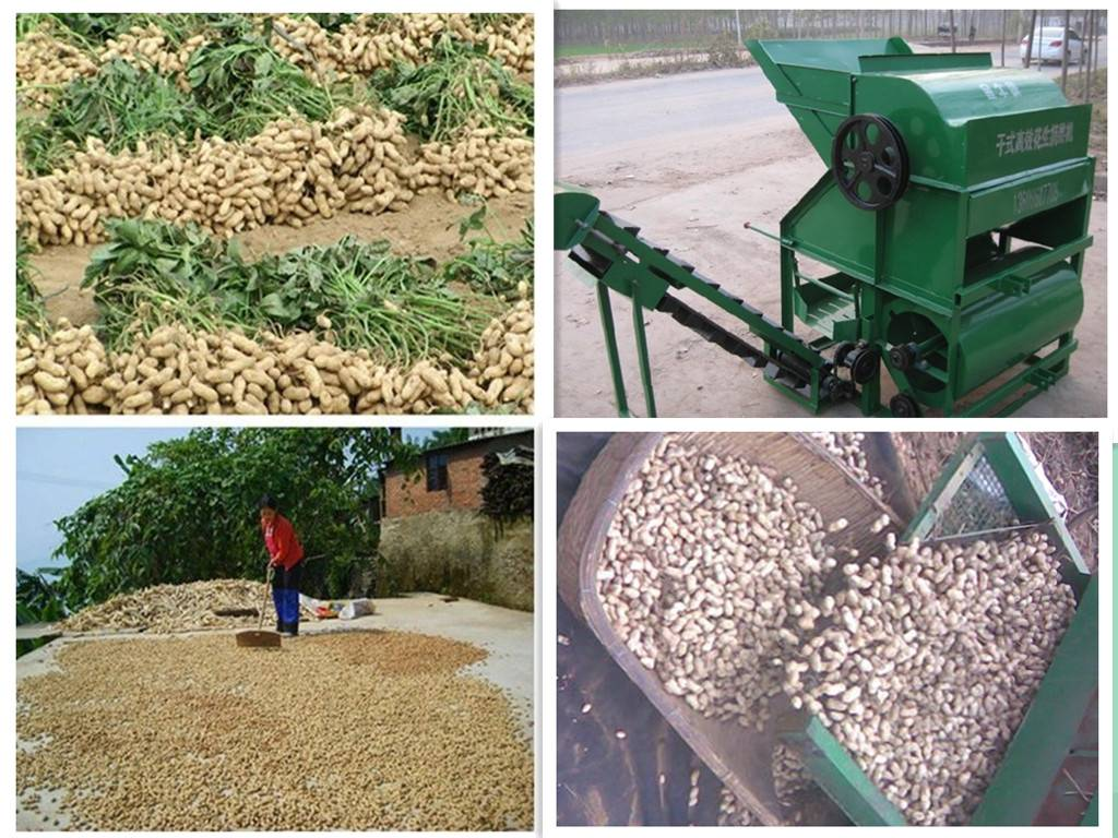 High picking rate,high capacity,Low break and peanut loss Peanut Picker/Peanut Picker/Peanut Picking