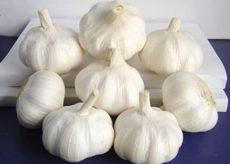 Pure white garlic from China