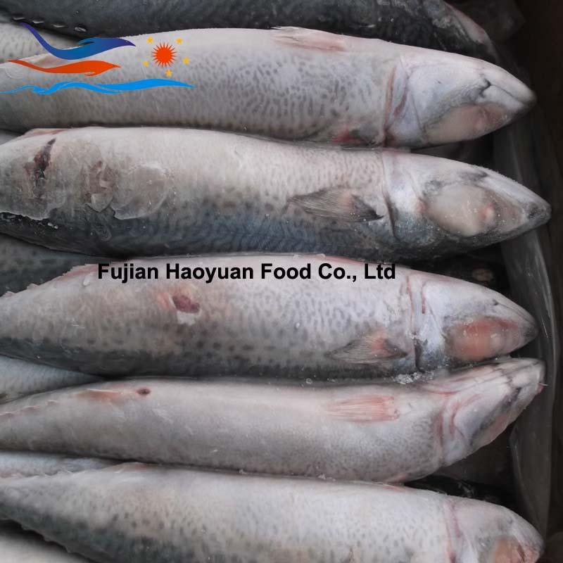frozen fish mackerel