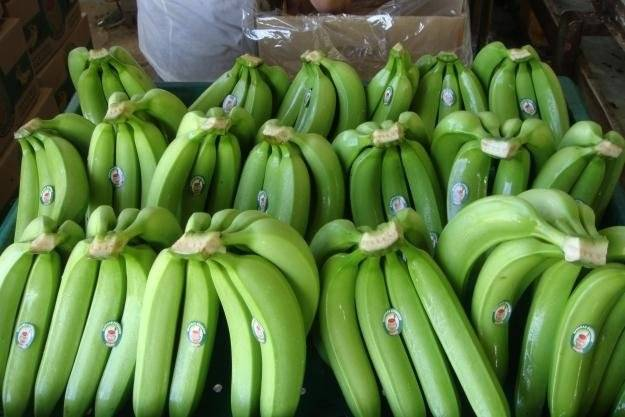 Fresh Cavendish ecuadorian bananas