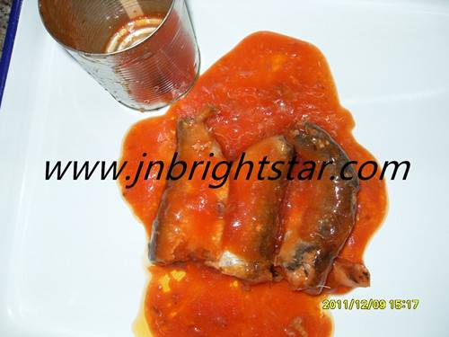 canned pilchard in tomato sauce