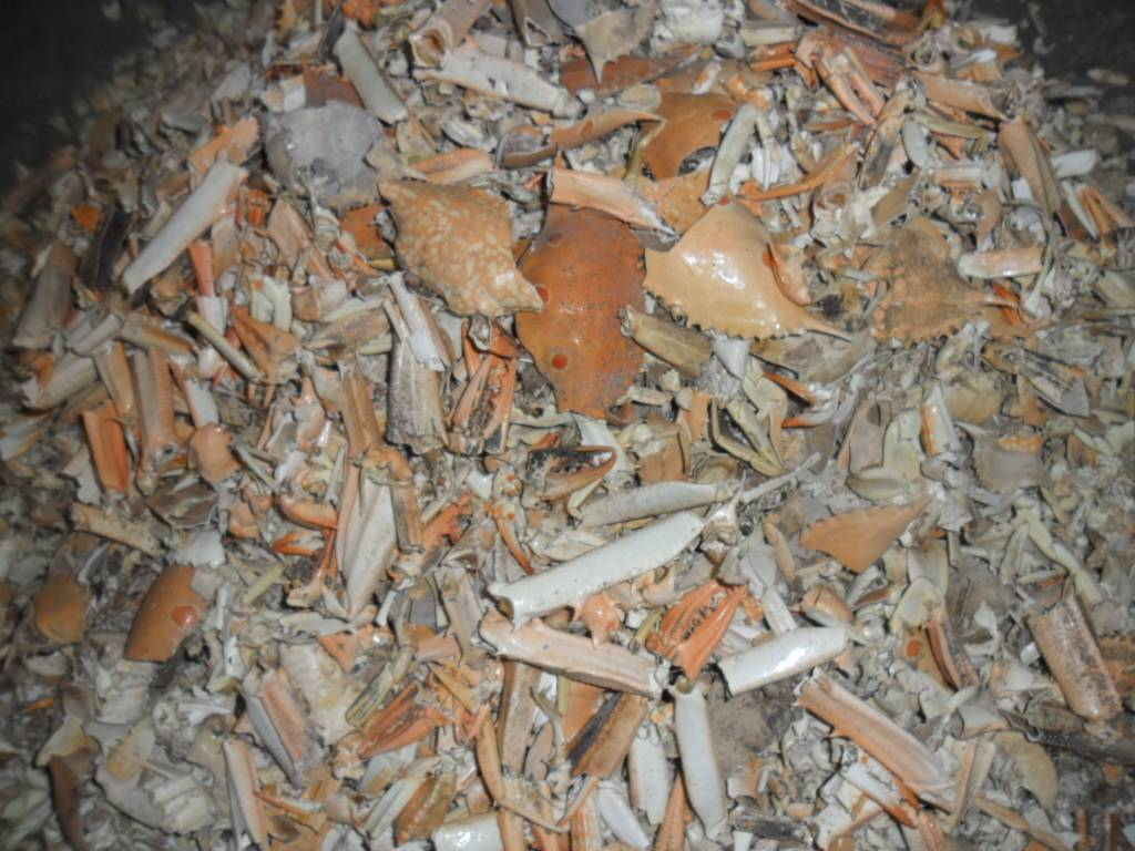 dry crab shells for make animal feed
