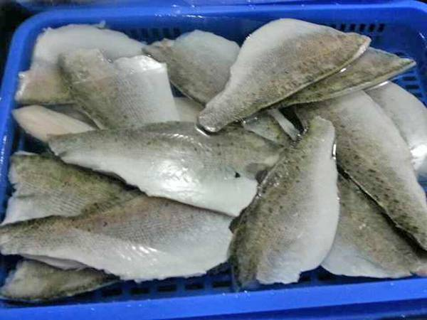 frozen barramundi fish fillet