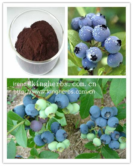 Bilberry extract CAS:84082-34-8