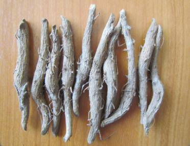Teak Rhizome - Small - Teak, Black wood, Siamese Rosewood, Rosewood - Agarharvest