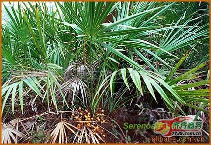 Supply Saw Palmetto Powder Extract
