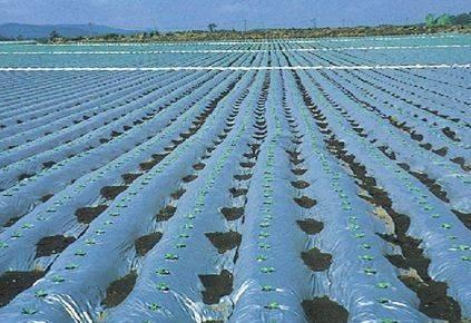 Agriculture PE Black Mulch Film