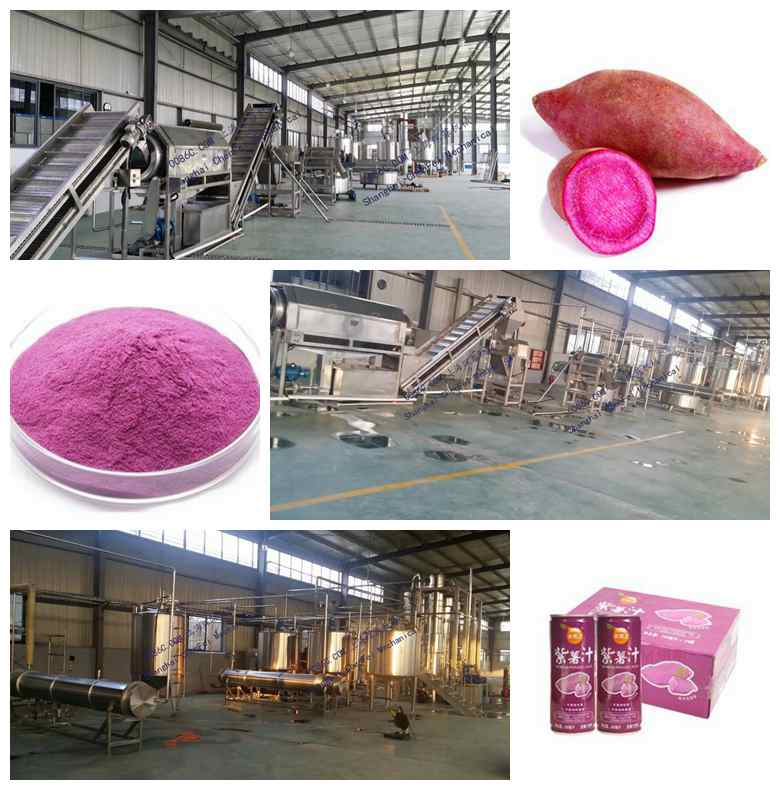 Purple sweet potato processing line machine