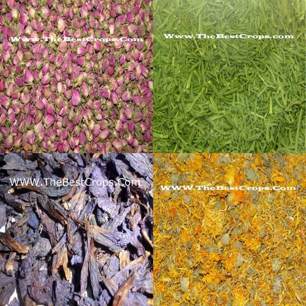 The best exporting grade of Dried Herbs and seeds