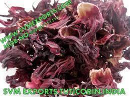 Hibiscus Rosa Sinensis Flower Exporters India