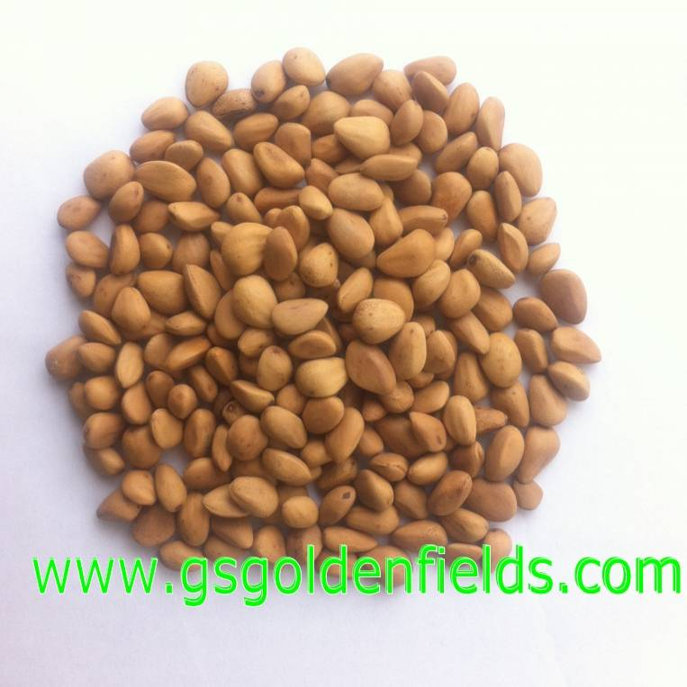 100% Organic Pine Nuts Nature Wild Pine Nuts Factory Direct Sale