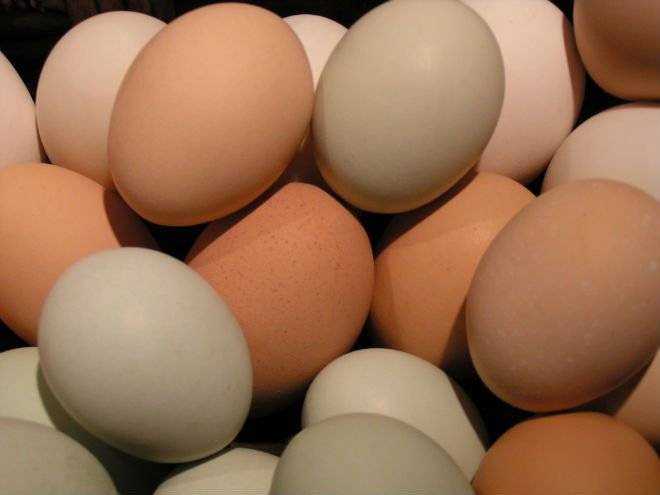 White and brown Chicken eggs for sale