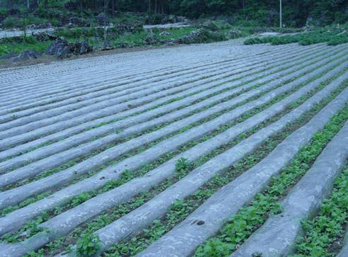 PE Agriculture Weed Control Mulch Film