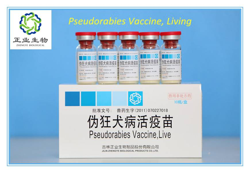 Pseudorabies Vaccine For Swine, Live.