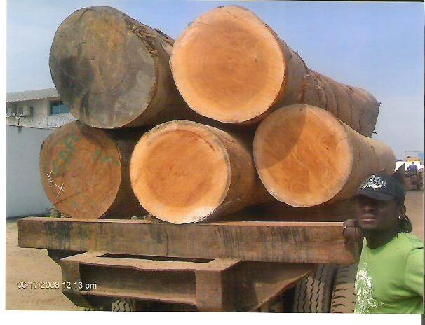 Sapelli  Logs or sawn timbers