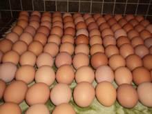Quality Fresh Chicken Eggs