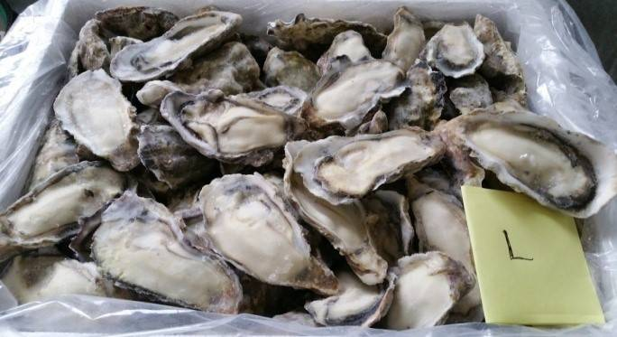 Frozen oyster meat, half-shell, dried, canned