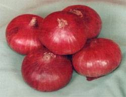 FRESH ONION FROM INDIA.