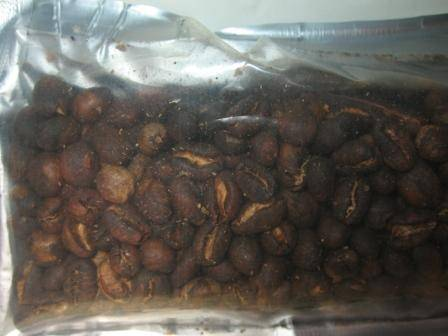 Peaberry Coffee ( Single Bean ) Specialty