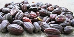 ORIGINAL exports Bulk Jojoba Seeds