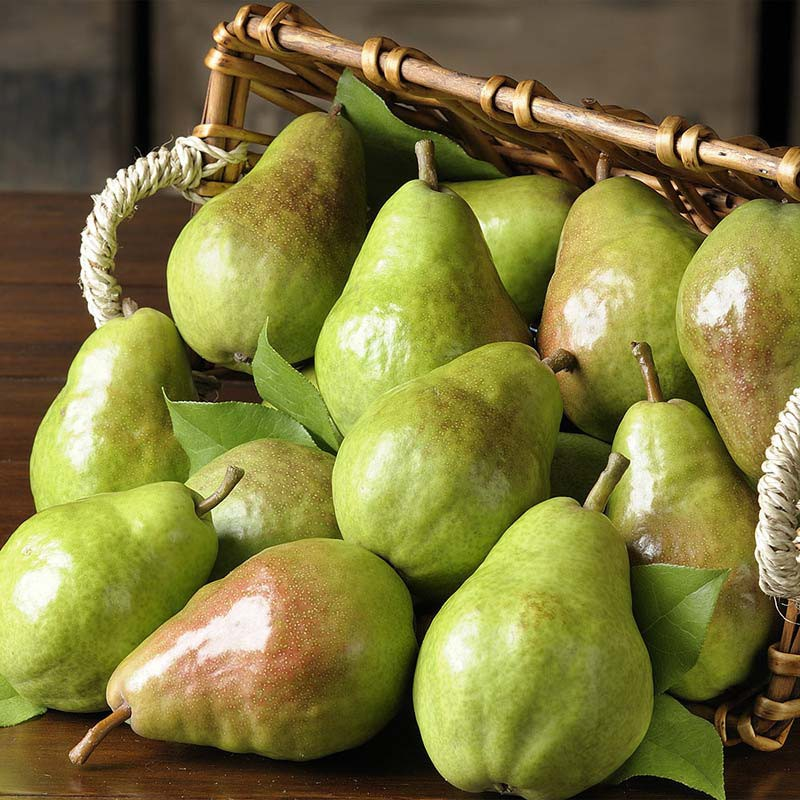 Fresh Pears for sale