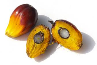 Plant & Animal Oil >> Palm Oil