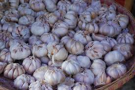 2014 crop fresh pure white Garlic Peeld Garlic