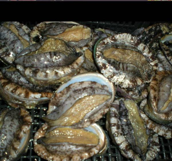 Brown-Lipped Abalone available for sale