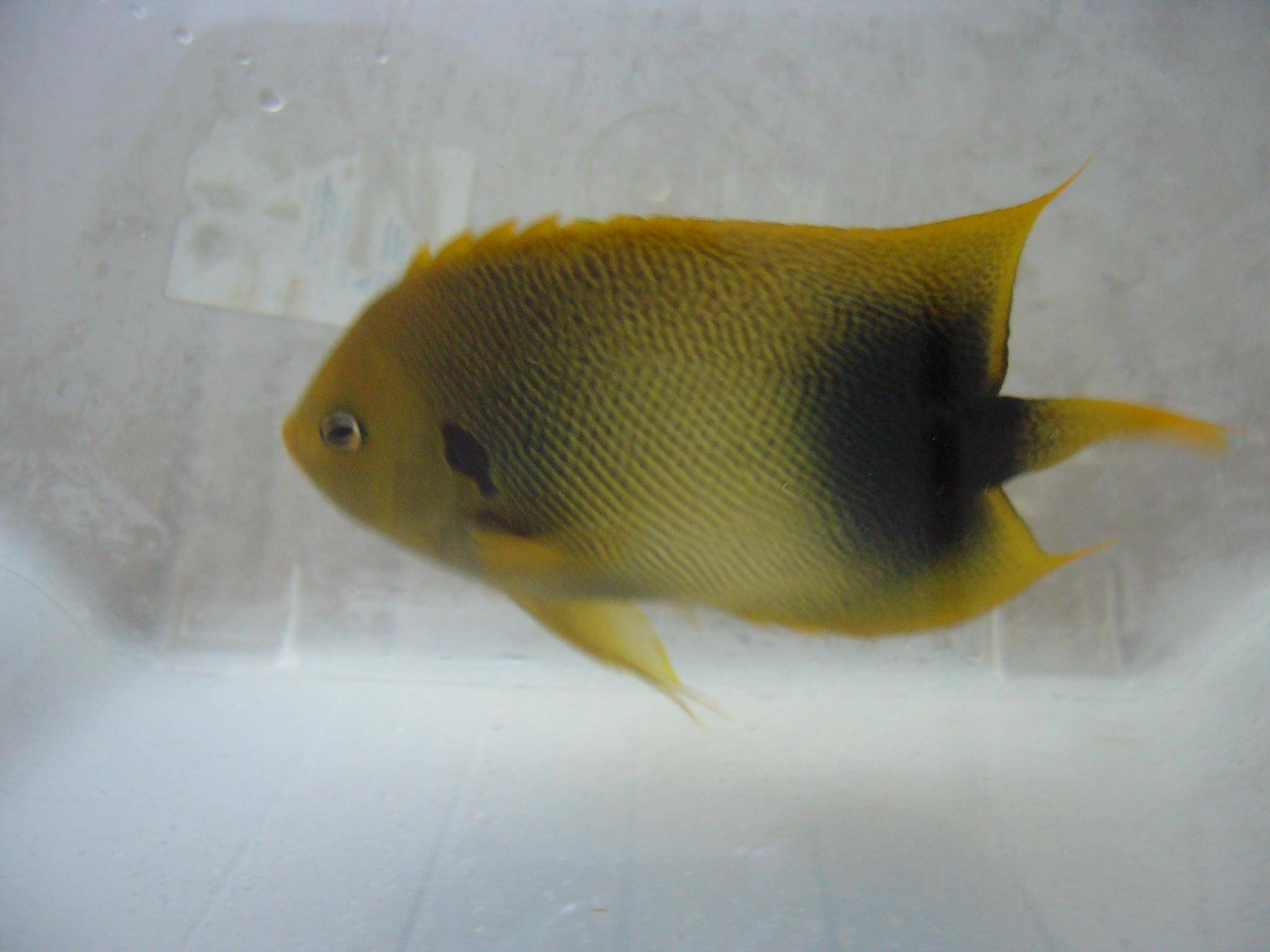 Ornamental Fish;Marine,Freshwater,Corals & Live rocks Exports