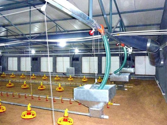 RCNH auto brolier pan feeding system - RaerCorp North Husbandry