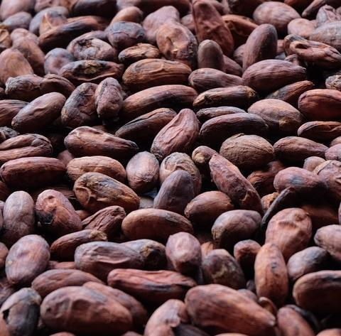 Cocoa Beans - Cacao Beans - Chocolate beans High Quality