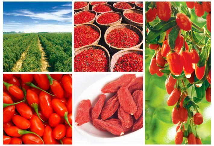 Dried Goji Berry from Ningxia China