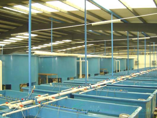RAS - Recirculating Aquaculture Systems Indoor Fish Farm