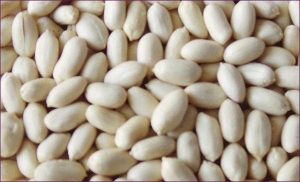 blanched peanut peanut kernel peanut kernel
