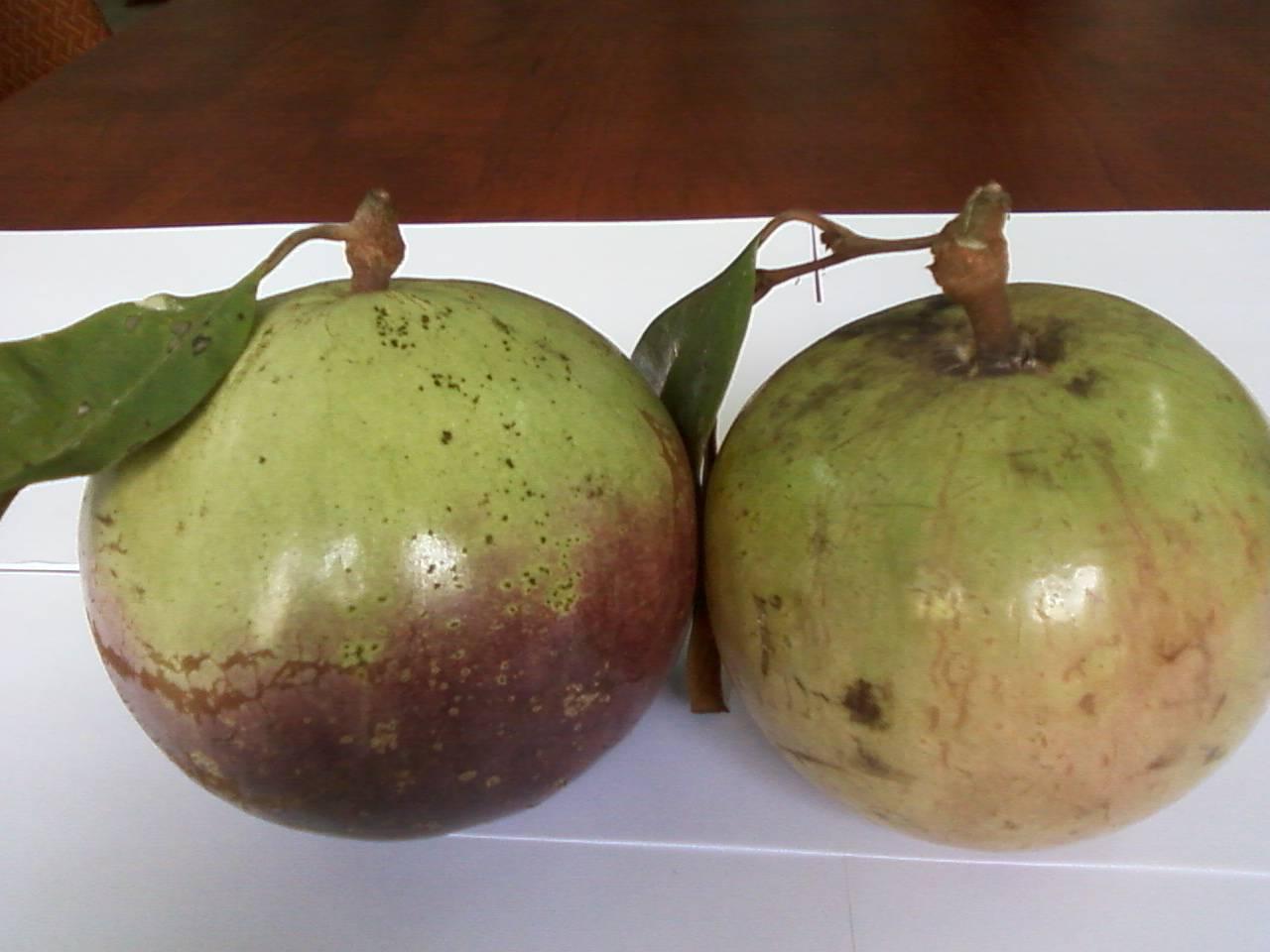 Sell Fresh star apple fruits/ Fresh fruits