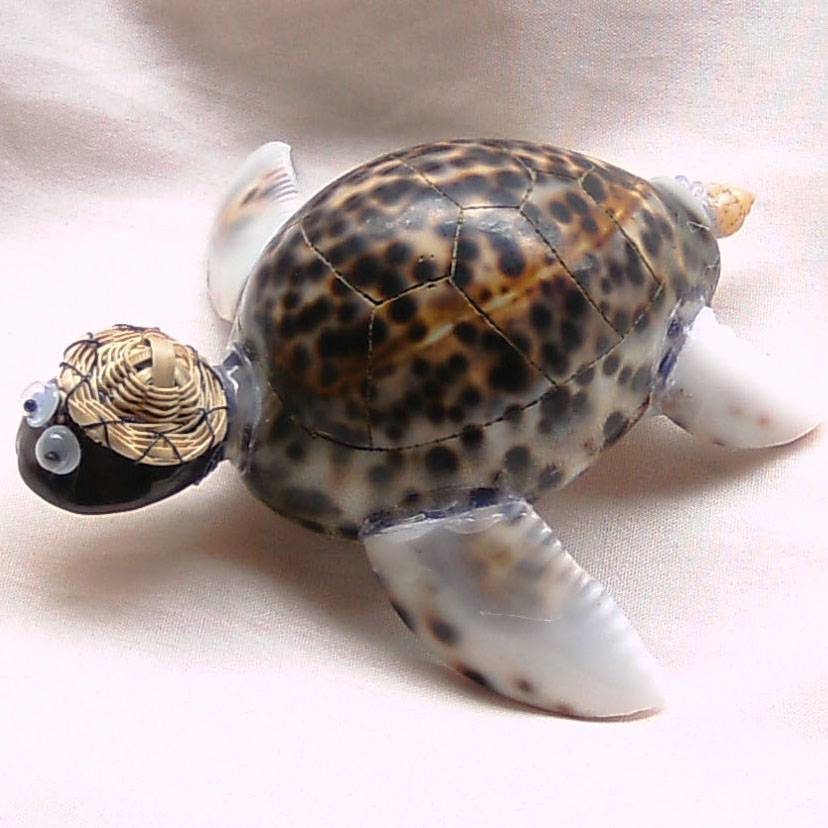 TIGER COWRIE TURTLE W/ HAT